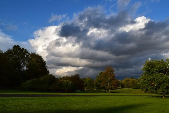 The Elveden Estate woods © Lavender's Blue Stuart Blakley