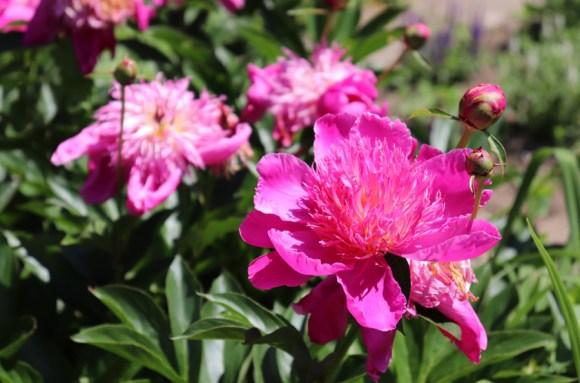 Preston Manor Brighton Flowers © Lavender's Blue Stuart Blakley