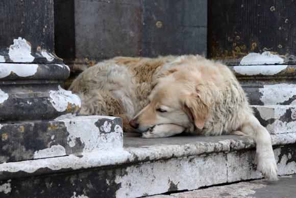 Annaghmore Sligo Dog © Lavender's Blue Stuart Blakley