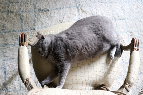 Cat La Divine Comedie Avignon Hotel © Lavender's Blue Stuart Blakley