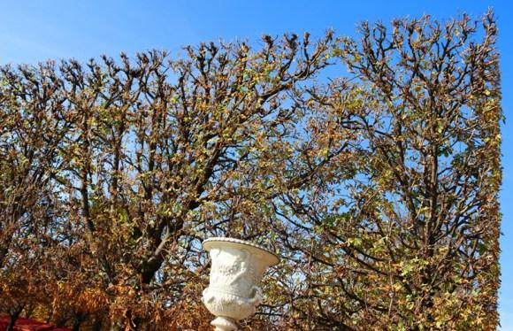 Jardin des Tuileries Hedge Paris © Lavender's Blue Stuart Blakley