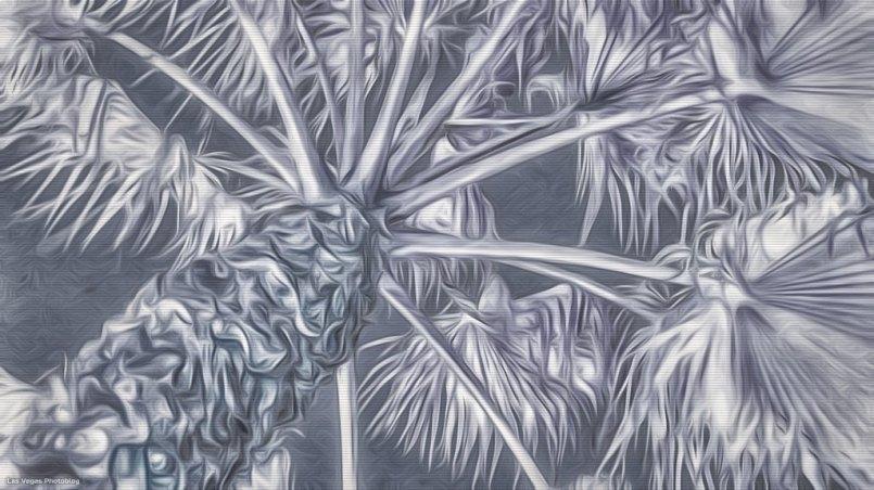 distressed-palm