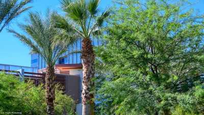 Palm trees with the One Summerlin building beyond