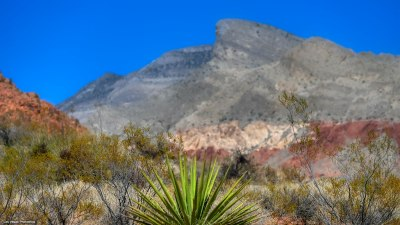 Yucca with Turtlehead Peak beyond