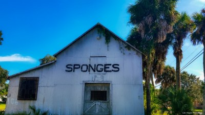 spongedoocks-3