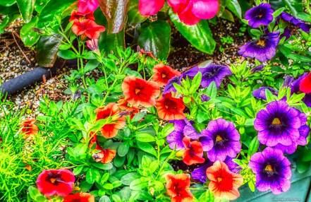 moms-flowers