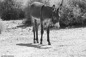 donkey-08