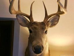 mr-buck