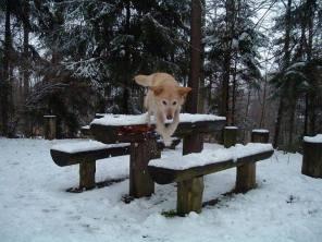 Hund des Monats Dezember: Laura