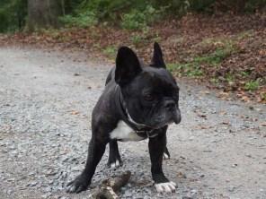 Hund des Monats Februar: Ephi