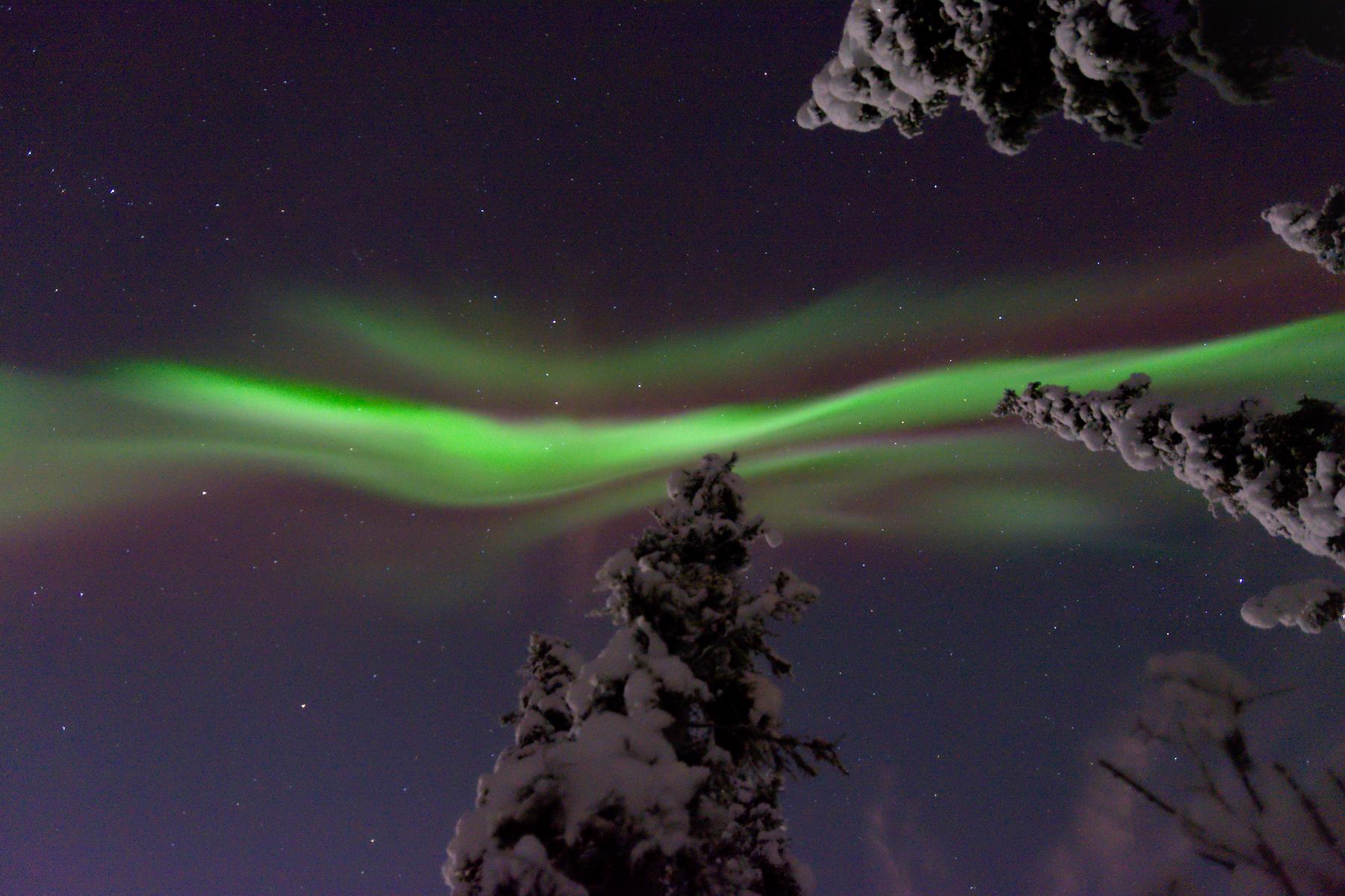 Aurora borealis over a boreal forest