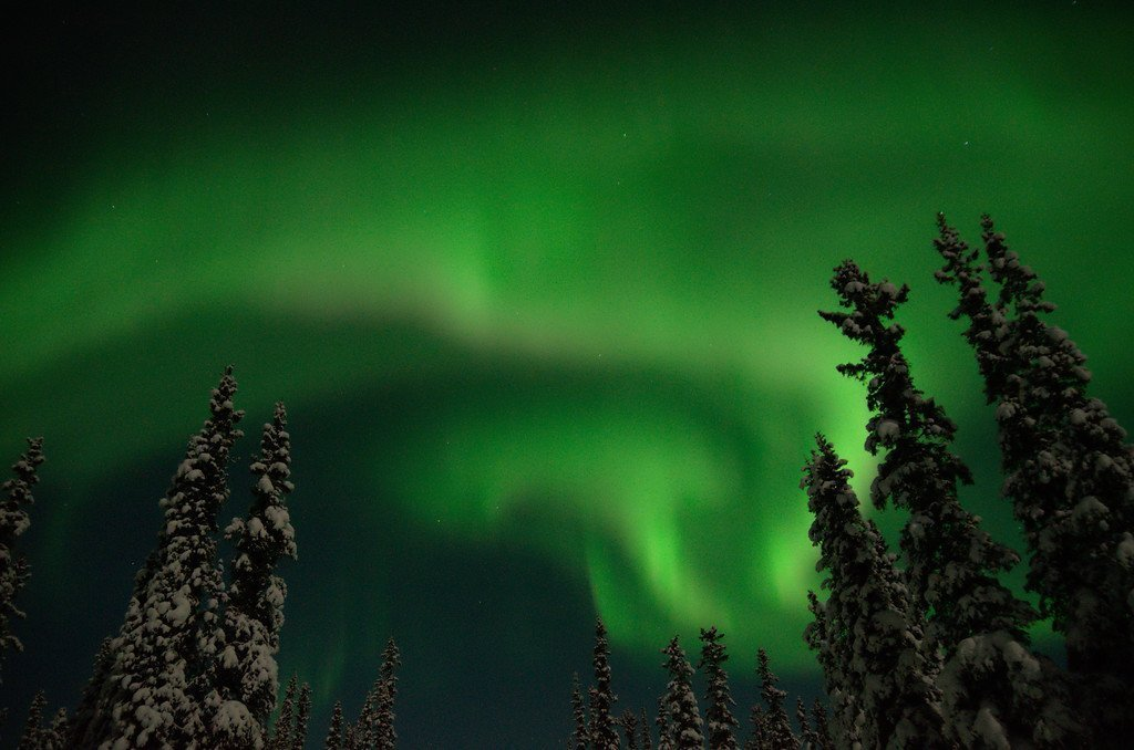 Northern lights over forest. Fairbanks, AK