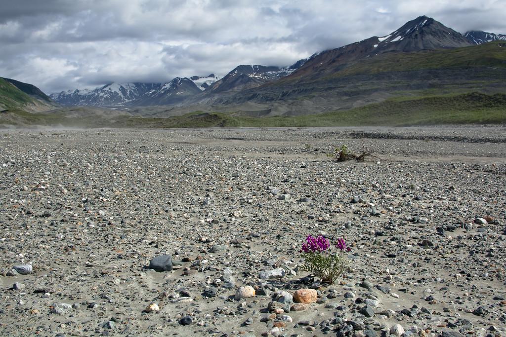 Desolate creekbed closer to the Canwell Glacier
