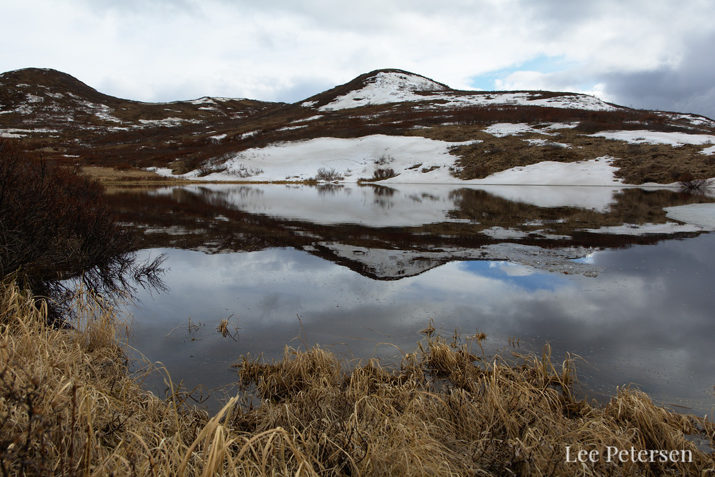 Pond reflection in spring at Polychrome Pass in Denali National Park