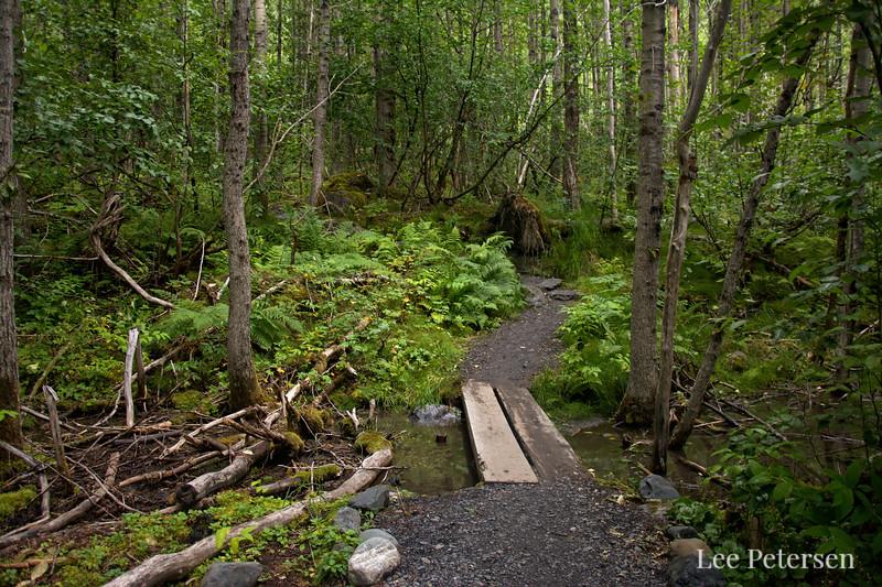 Small footbridge along the Glacier View Trail