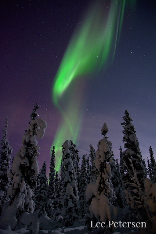 Aurora borealis over a snow-covered boreal forest in Fairbanks, Alaska