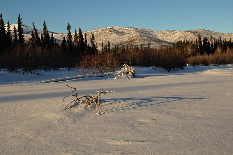 Driftwood on the West Fork of the Chena River near Angel Rocks.