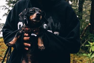 live work wander linus dachshund