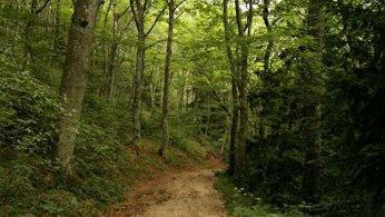 Forêt du Québec