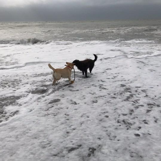 Seaton beach - dog friendly all year round