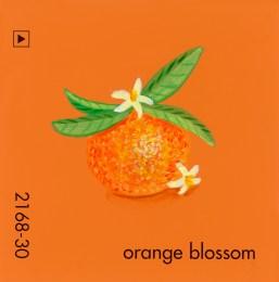 orange blossom649