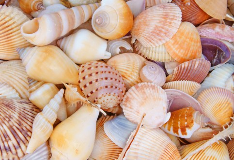 http://blog.pinklyperfect.com/entertainment/you-collected-all-those-seashells-now-what/