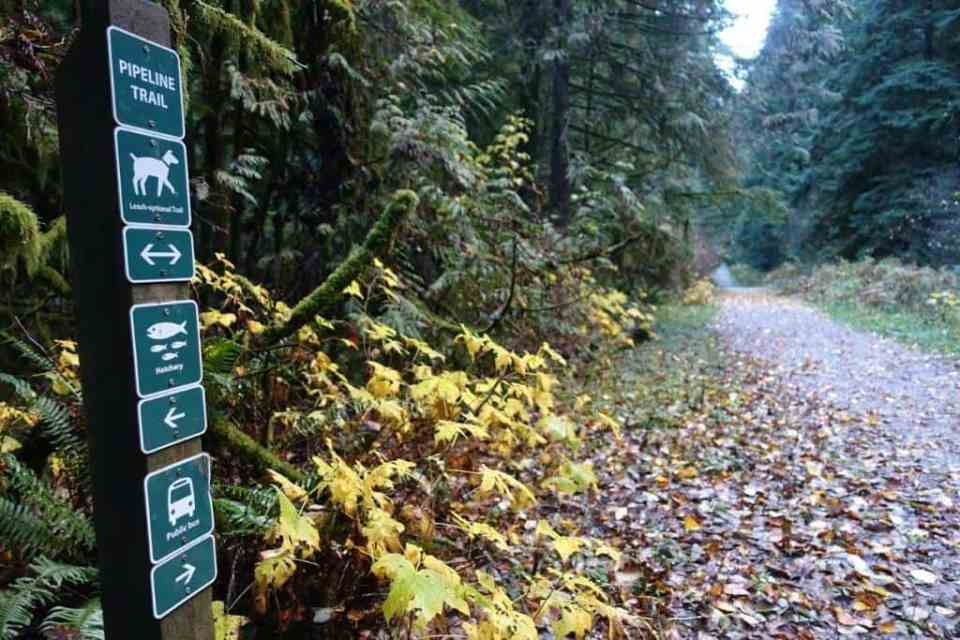 Clear neat signs along the Capilano trail to prevent you getting lost