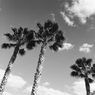 palmsblackandwhite