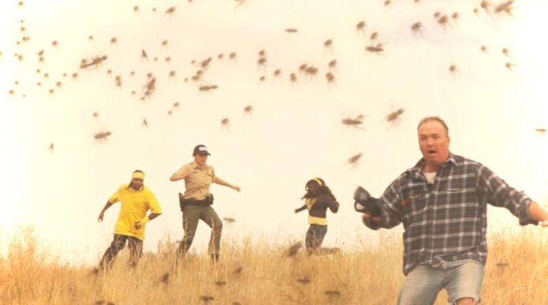 Tsunambee movie - killer bee swarm