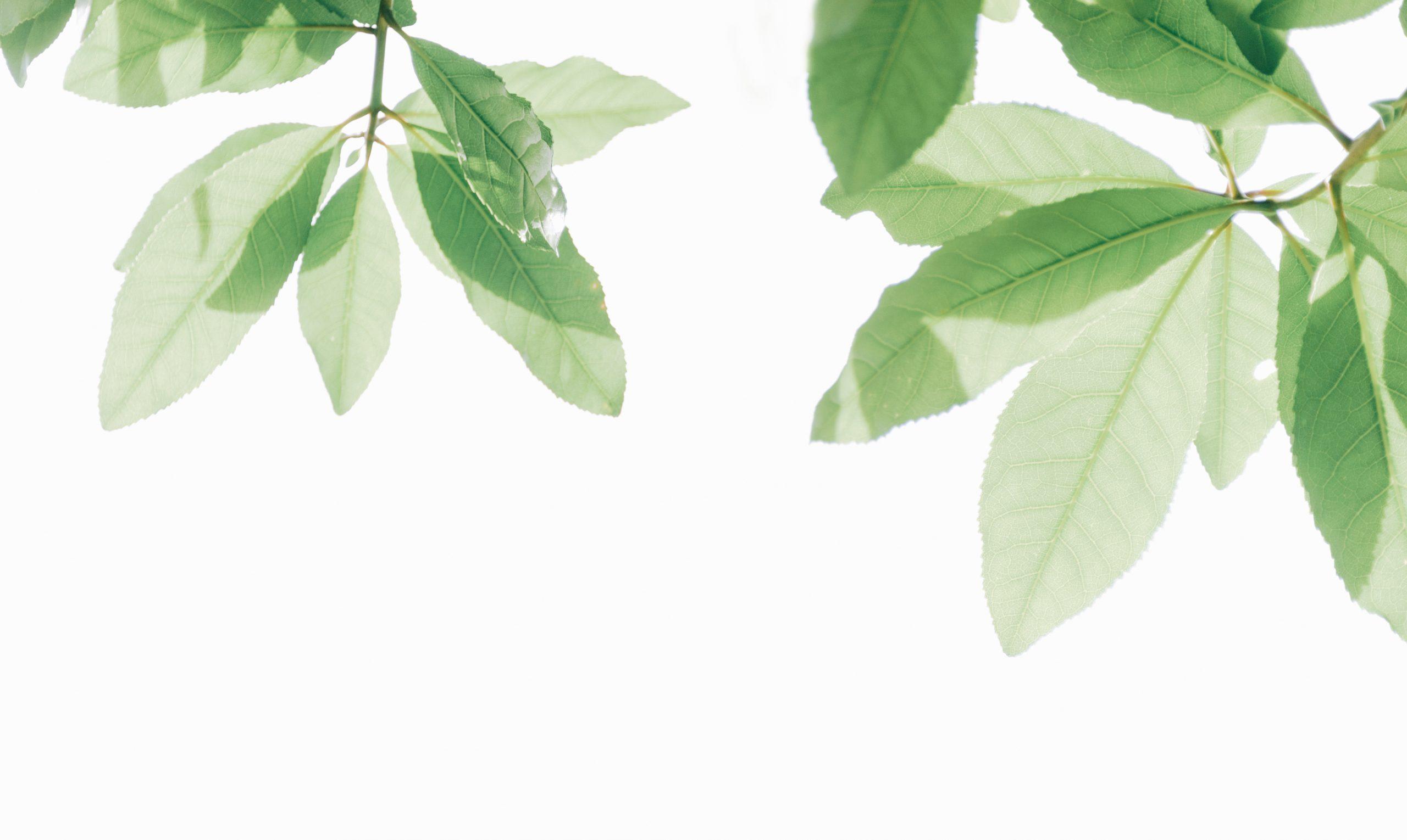 Canva - Green Leaf