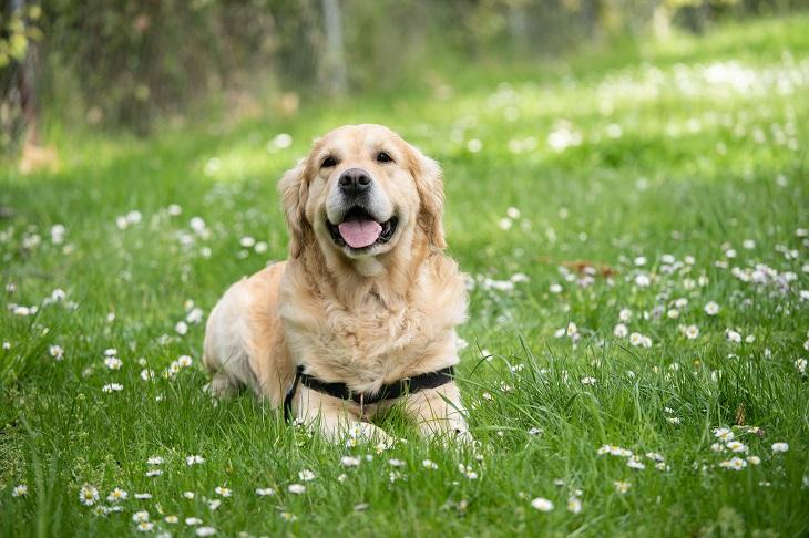 Infectolab - dog