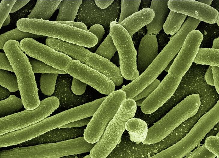 Infectolab - bacteria