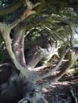 cypress hollow 2