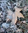 pilot hill winter