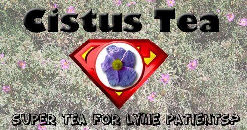 Cistus Tea: Super Tea for Lyme Patients