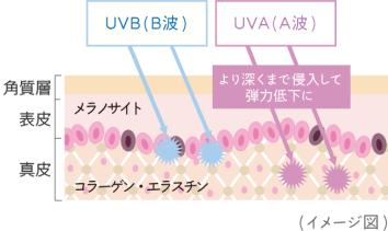 img_uva_uvb03[1]