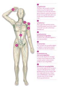 Das Lymphgefäßsystem
