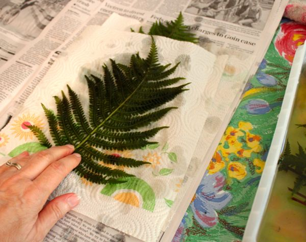 putting fern on paper towel