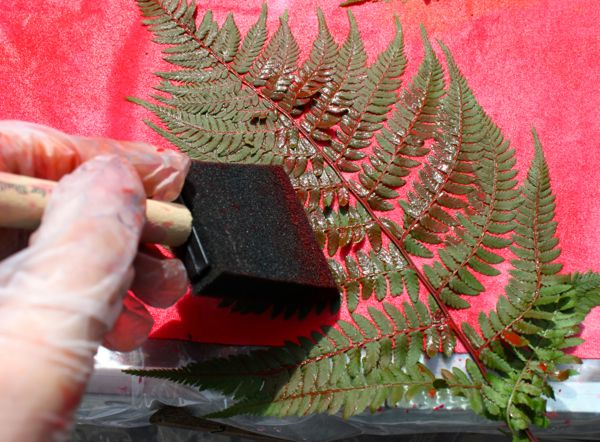 Adding paint to the fern