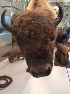 Not sure who is the most popular selfie target - bison, brown bear or tiger?