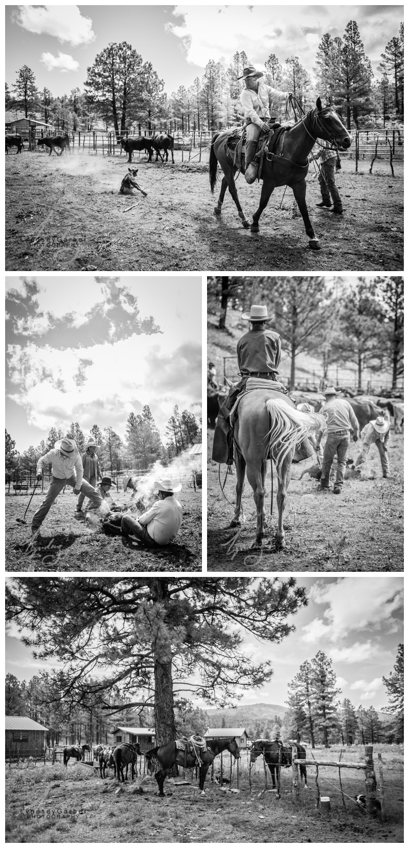 New Mexico Cowboy Ranch Branding by Photographer Lyndsey Garber