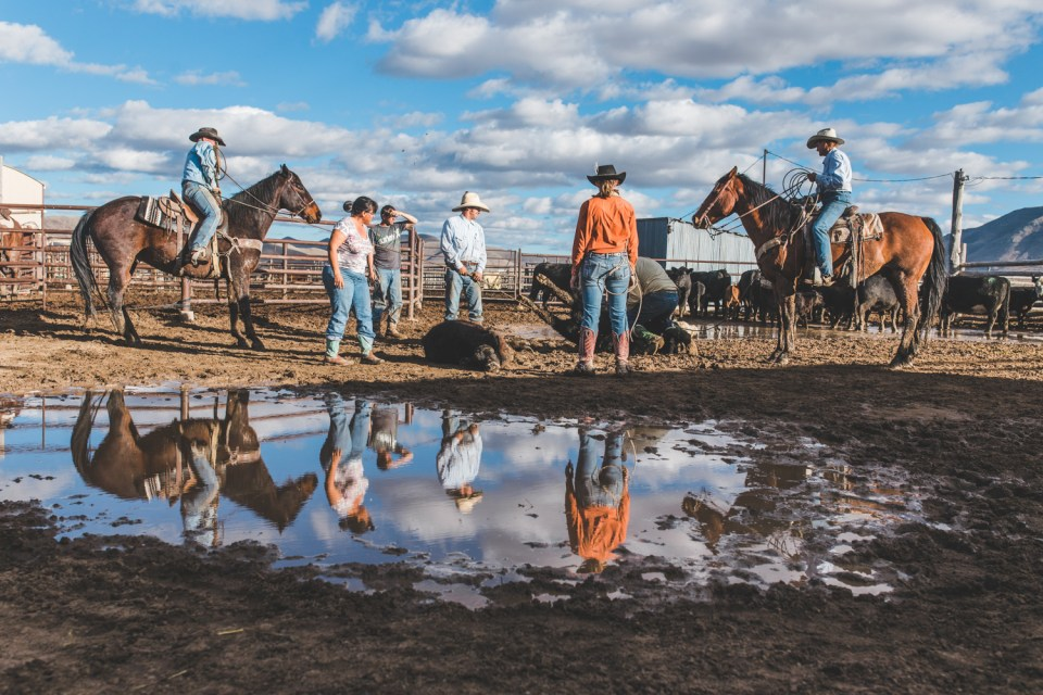 top 3 camera's for ranch life photography