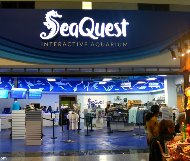 Seaquest Is A K Square Foot Interactive Aquarium Inside Boulevard Mall In Vegas Interactive If You Can Reach It You Can Touch It