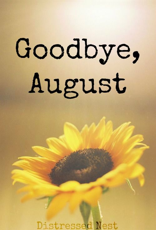 Lynette M Burrows, image of sunflower, goodbye august