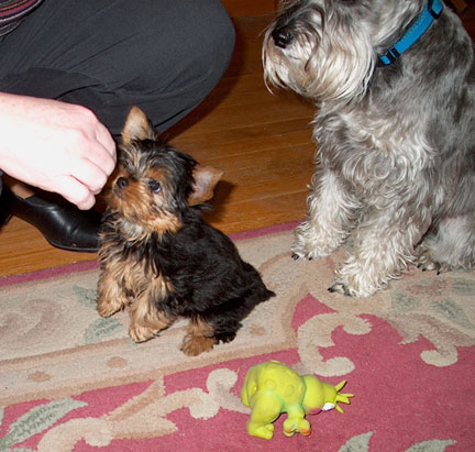Baby Astro sits pretty for a treat with big brother Nemo watching