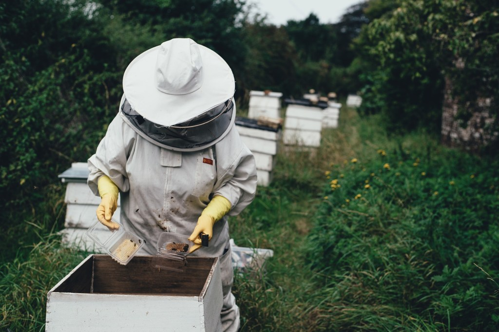 Photo of a beekeeper working in a hive like the ones I write about in the Beekeeper's fear