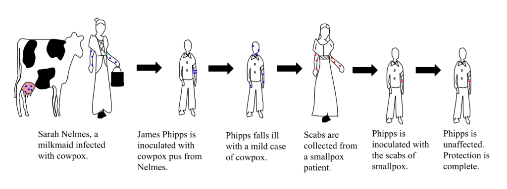 Line drawing showing Jenner's progression from Sarah Nelmes to inoculating James Phipps to collecting smallpox scabs and injecting them into Phipps then exposing him to smallpox, the one deadly virus that won't kill you.