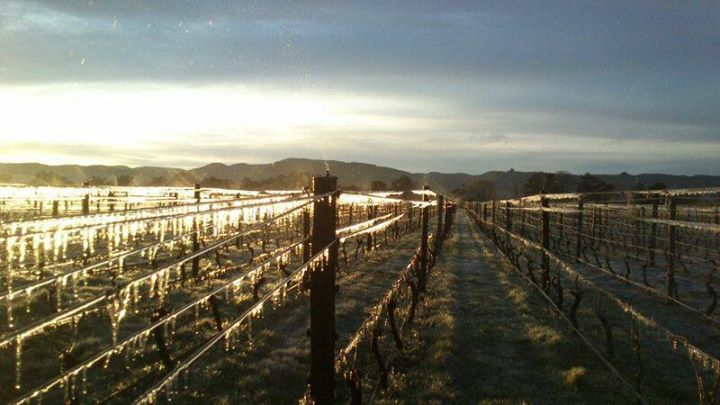 Lynfer Estate Icy Vineyard