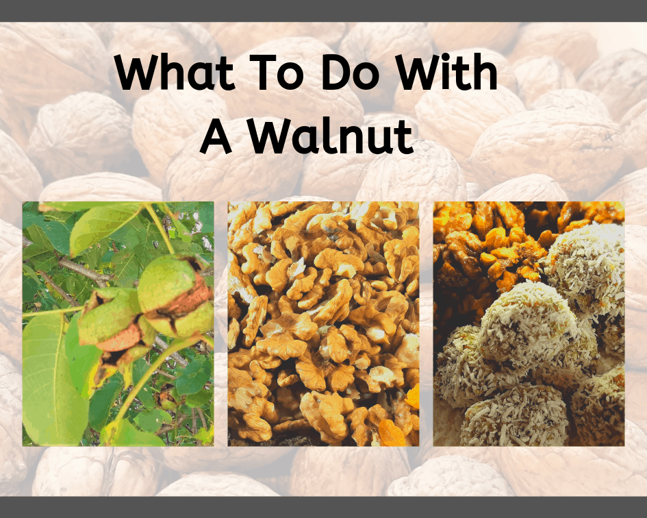 Walnut picture montage