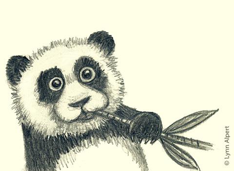 Sketch of panda eating bamboo by children's illustrator Lynn Alpert